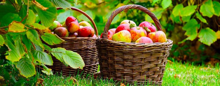 cesto mele